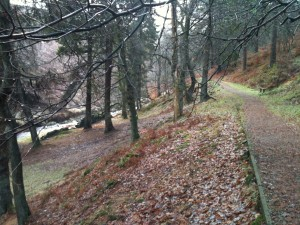 Goyt Valley Woodland Walk