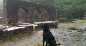 The dog at Errwood Hall
