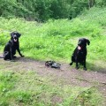 Orienteering a great dog friendly activity in the Peak District
