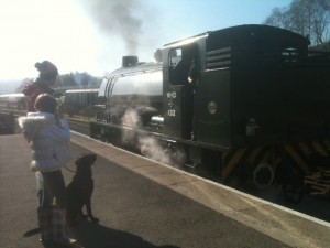 Dog Friendly steam trains