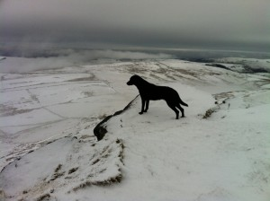 Dog on the Edge!