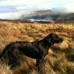 Tilly in the Goyt Valley