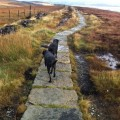 Enjoying the Peak District with your dog
