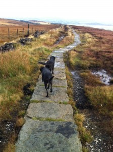 Dogs enjoying a walk around Goyt Valley