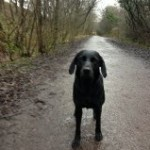 Tilly on the Sett Valley Trail