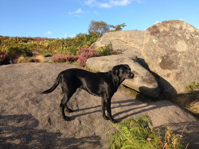 Dog Friendly Pubs In Bakewell Derbyshire